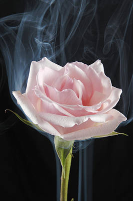 Photograph - Smoking Rose by Avril Christophe