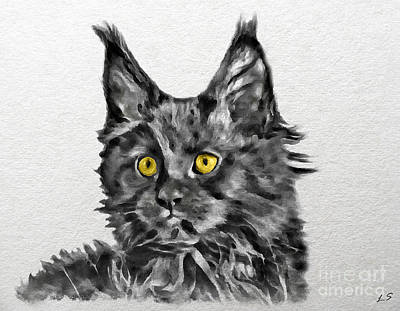 Drawing - Smoky Black Kitten Maine Coon by Sergey Lukashin