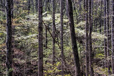 Photograph - Smoky Dogwood 08 by Jim Dollar