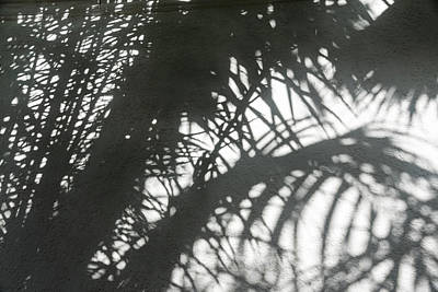 Photograph - Smoky Gray Shadows -  by Georgia Mizuleva