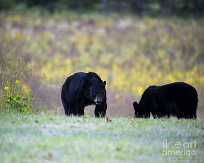Photograph - Smoky Mountain Black Bears by Nature Scapes Fine Art