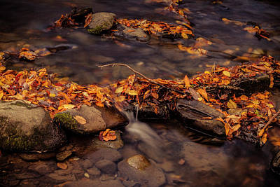 Photograph - Smoky Mountain Creek In Fall by Teri Virbickis