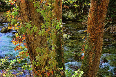 Photograph - Smoky Mountain Stream 2 by HH Photography of Florida