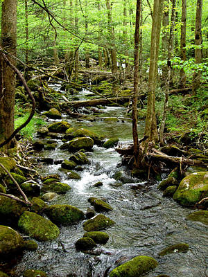 Smoky Mountain Stream 2 Original by Nancy Mueller