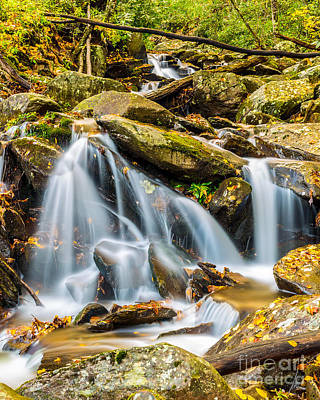 Photograph - Smoky Mountain Stream by Gene Berkenbile