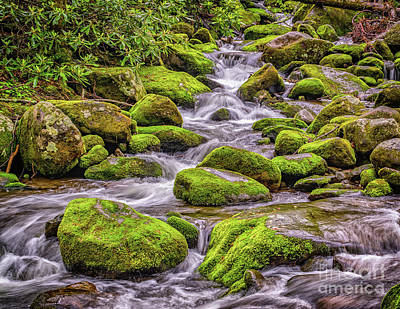 Smoky Mountain Stream Art Print by Nick Zelinsky