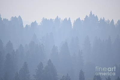 Photograph - Smoky Pines by Larry Johnston