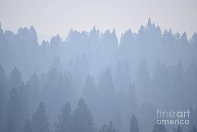 Smoky Pines Art Print