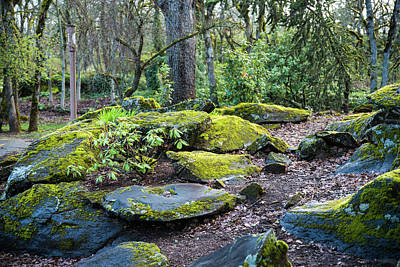 Photograph - Smooth Rocks And Moss by Tom Cochran