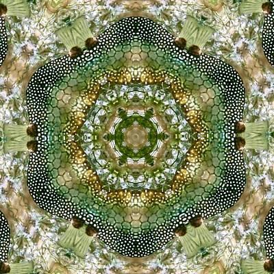 Trunkfish Wall Art - Digital Art - Smooth Trunkfish Kaleidoscope by Annette Kirchgessner