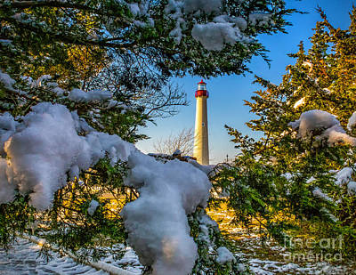 Photograph - Snowy Trees At Cape May Light by Nick Zelinsky