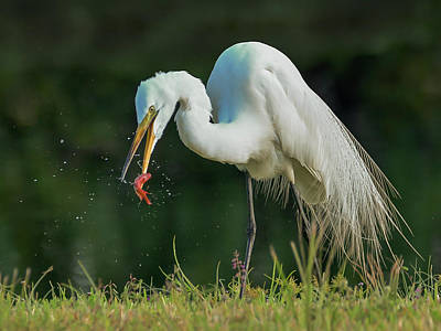 Photograph - Snack by Don Durfee