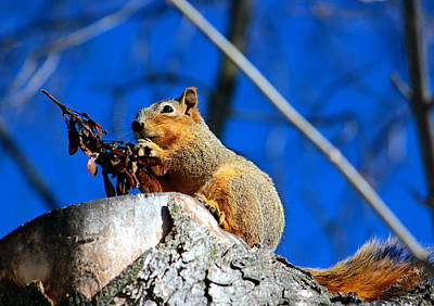 Photograph - Snack Time by Jean Evans