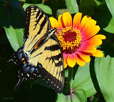 Snacking Tiger Swallowtail Butterfly Art Print