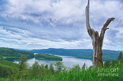 Photograph - Snag Over Rife Lake by Ansel Price
