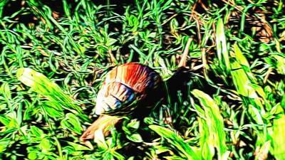 Abstract Photograph - Snail 6 In Abstract by Kristalin Davis