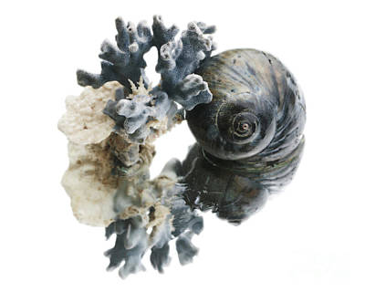 Photograph - Snail And Coral by Mary Haber