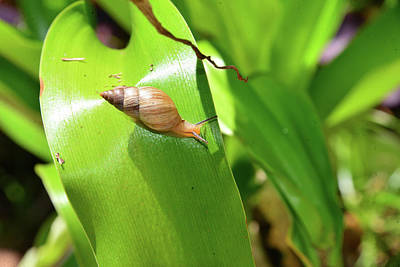 Photograph - Snail And Landscape by David Lee Thompson