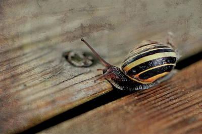 Photograph - Snail by Andrea Kollo