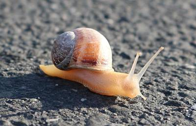 Photograph - Snail  by Christy Pooschke