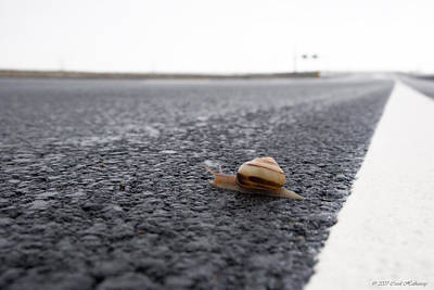 Photograph - Snail Crossing... by Carol Hathaway