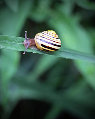 Photograph - Snail In His Green Jungle by Brooke T Ryan