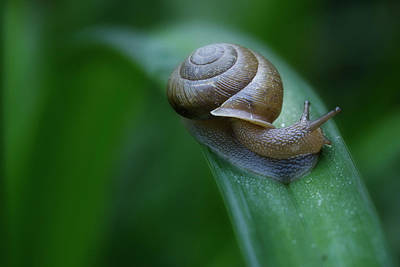 Photograph - Snail In The Morning by Mike Eingle