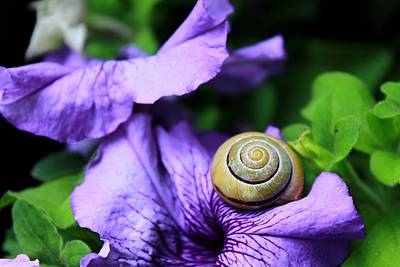 Animal Digital Art - Snail by Maye Loeser