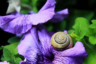 Flower Digital Art - Snail by Maye Loeser