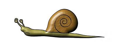 Animals Digital Art - Snail by Michal Boubin