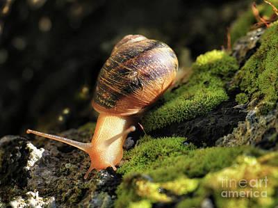 Digital Art - Snail Moving by Stephan Grixti