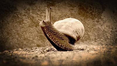 Photograph - Snail On The Rock In Sepia Tone by Jacek Wojnarowski