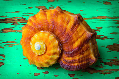 Nature Study Photograph - Snail Sea Shell On Green Board by Garry Gay