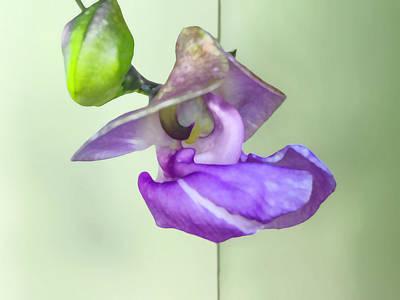 Photograph - Snail Vine Blossom by Stan  Magnan
