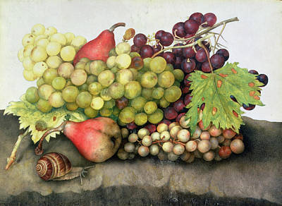 Snail With Grapes And Pears Art Print by Giovanna Garzoni