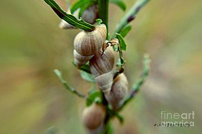Photograph - Snails by Janice Spivey