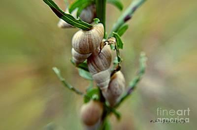 Photograph - Snails by Janice Spivey