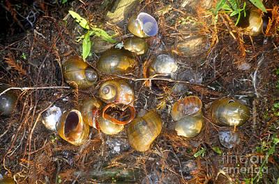 Snails Of An Ibis Art Print by David Lee Thompson