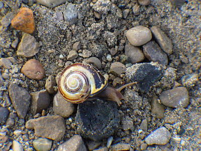 Photograph - Snails Pace by Peggy King