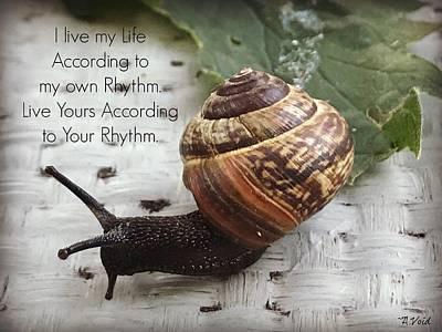 Photograph - Snail's Rhythm by Catherine Asoka Void