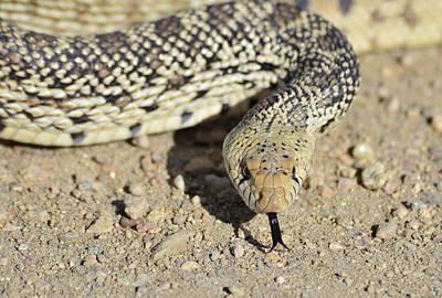 Photograph - Snake 2 by Rae Ann  M Garrett