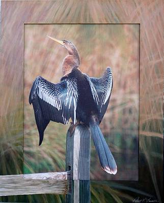 Anhinga Mixed Media - Snake Bird by Robert Boynton