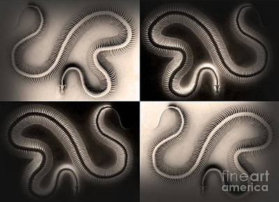 Painting - Snake Bones by Gregory Dyer