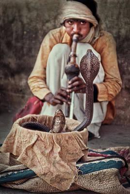 Photograph - Snake Charmer With Cobras by David Halperin