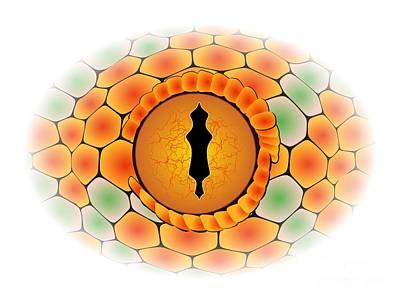Snake Eye Art Print by Michal Boubin