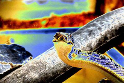 Snake Eyes Art Print by Peter  McIntosh