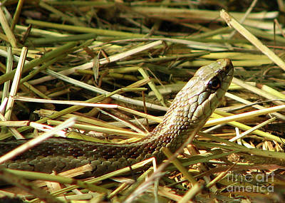 Snake In The Grass Art Print by Deborah Johnson