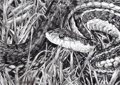 Drawing - Snake In The Grass by Shana Rowe Jackson