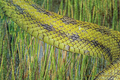 Digital Art - Snake In The Grass Textures by Richard Goldman