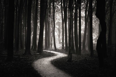 Of Trees Photograph - Snake Path by Janek Sedlar